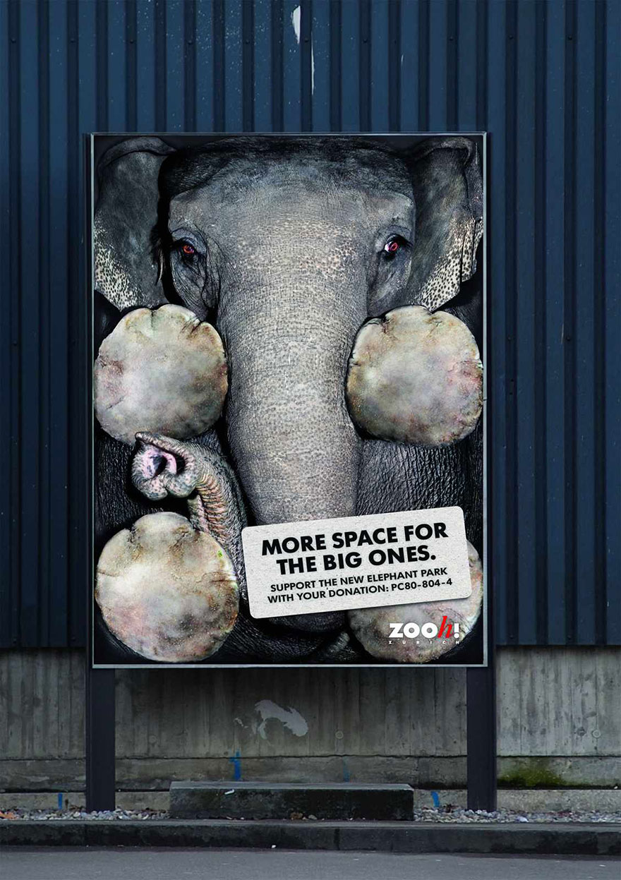 Zurich Zoo: More Space For The Big Ones - Zooh!