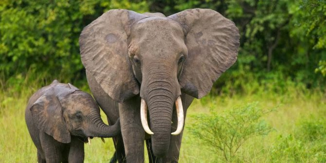 Hewan Paling Pintar Di Dunia