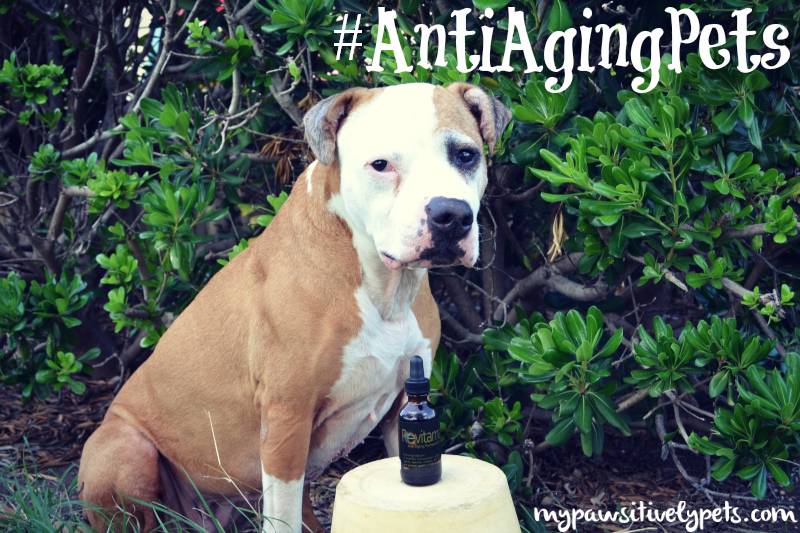 Revitamal #AntiAgingPets Supplement Review and Giveaway