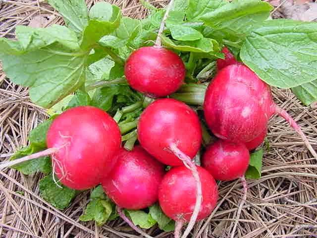 посадки с томатами,