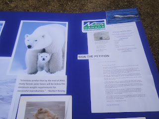 Image of polar bear information posters