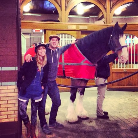 Anheuser Busch, Clydesdale, Horse, St. Louis, Missouri