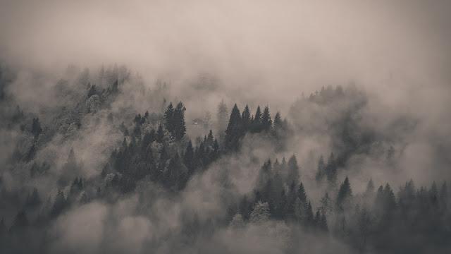 Breathtaking Foggy Forest Desktop Wallpaper