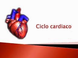 Corazón- Ciclo cardiaco