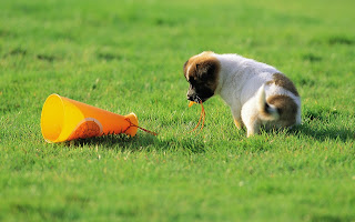 Cute Puppy Playing With Cup