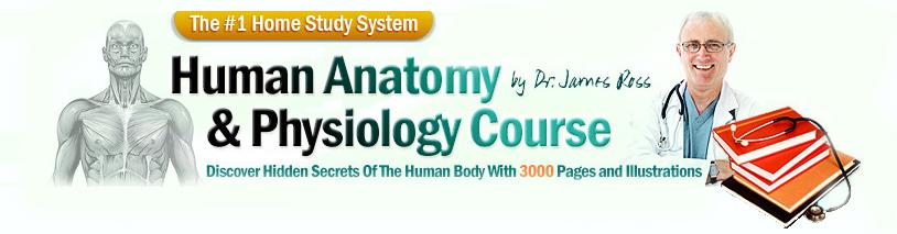 ø The #1 Human Anatomy and Physiology Course ø | Learn ...