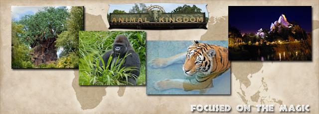 Happy 15th Anniversary Disney's Animal Kingdom