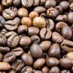 cafeina Alimentos tóxicos para cães