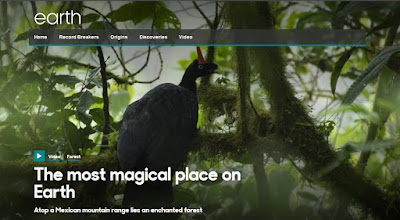 http://www.bbc.com/earth/story/20160105-the-most-magical-forest-on-earth-lies-atop-a-mexican-mountain