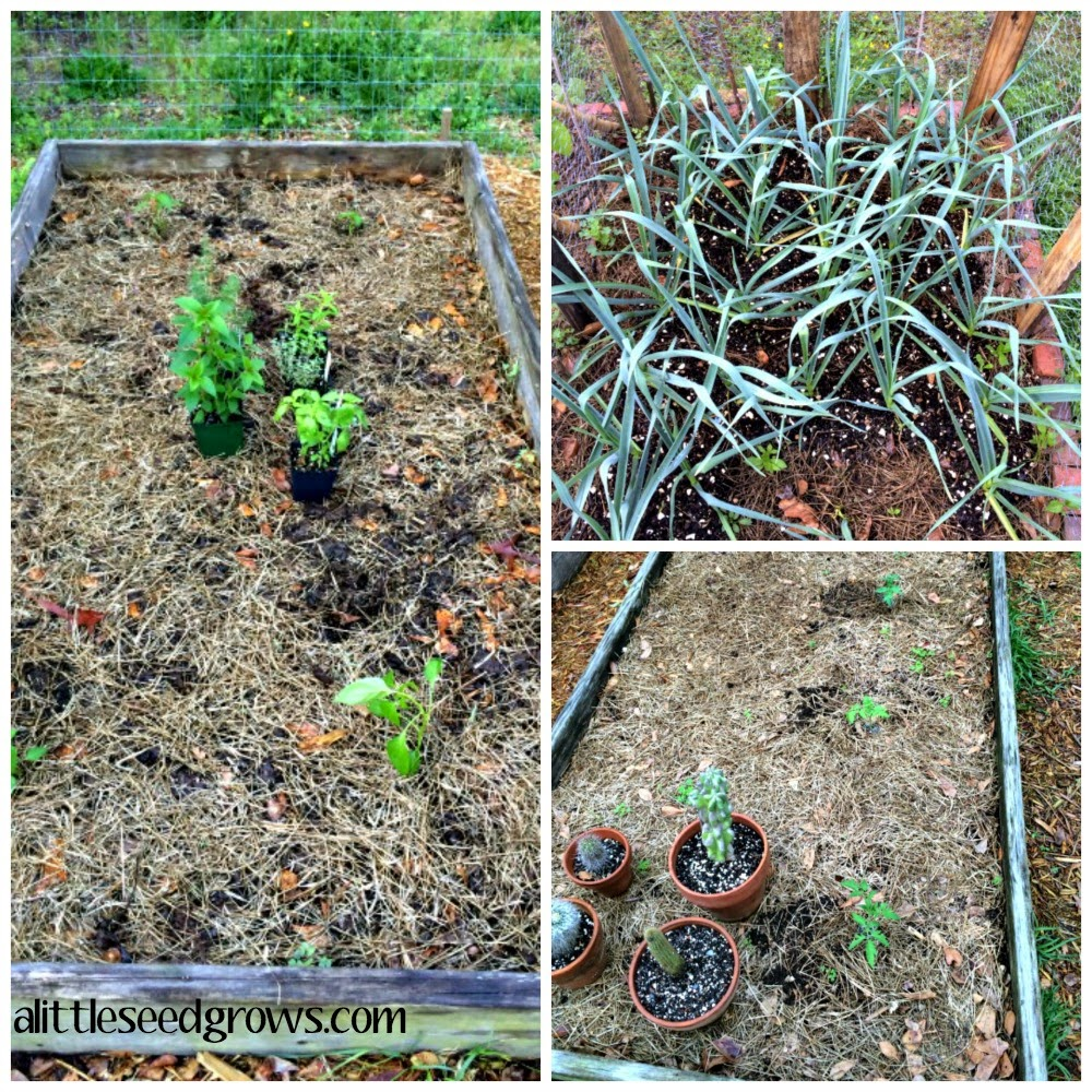 Happy Earth Day! [Garden Update at A Little Seed Grows]