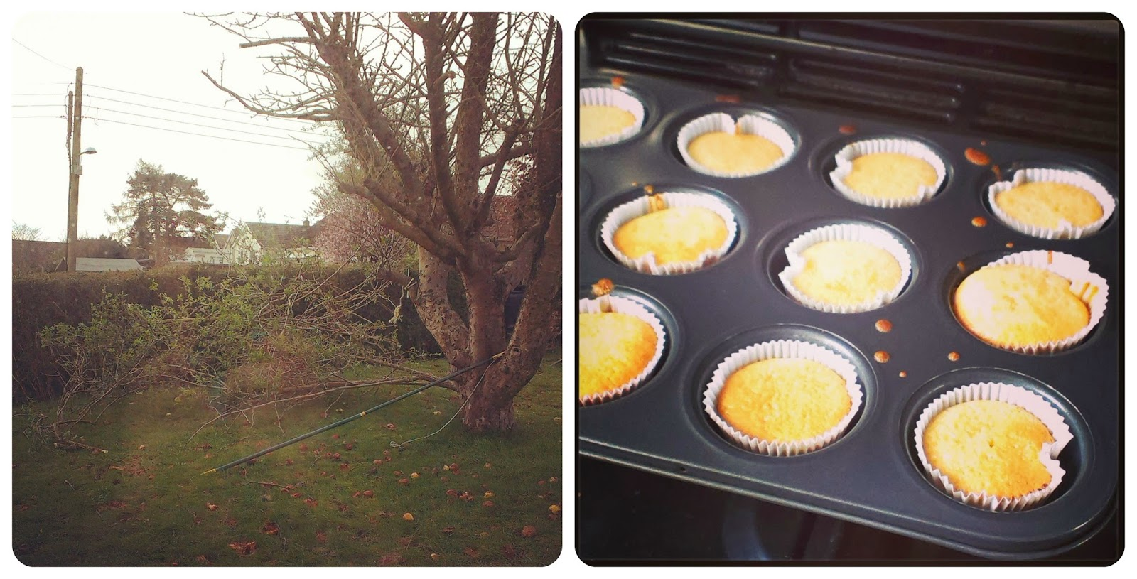 Elder tree pruning and cake baking