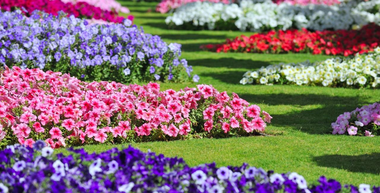 Turminha do Yuri O Jardim Mais Florido do Mundo