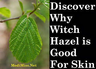 Discover Why Witch Hazel is Good For Skin