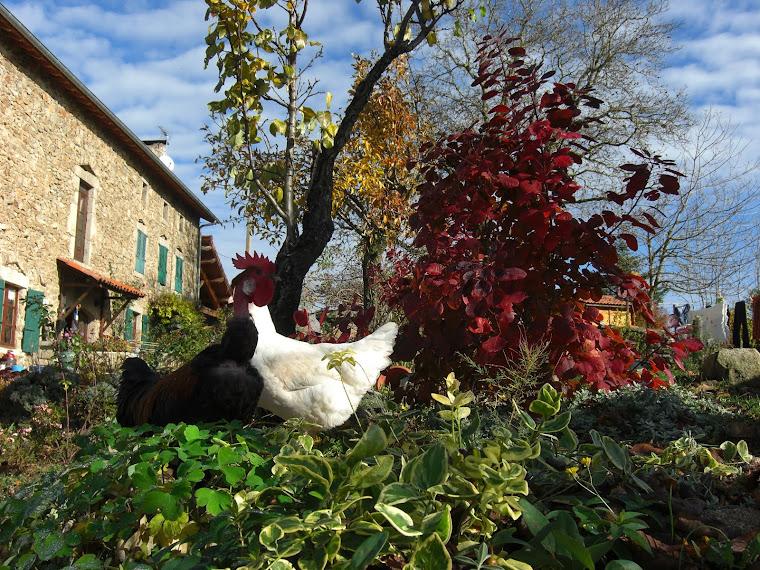 Der Hühnerhof