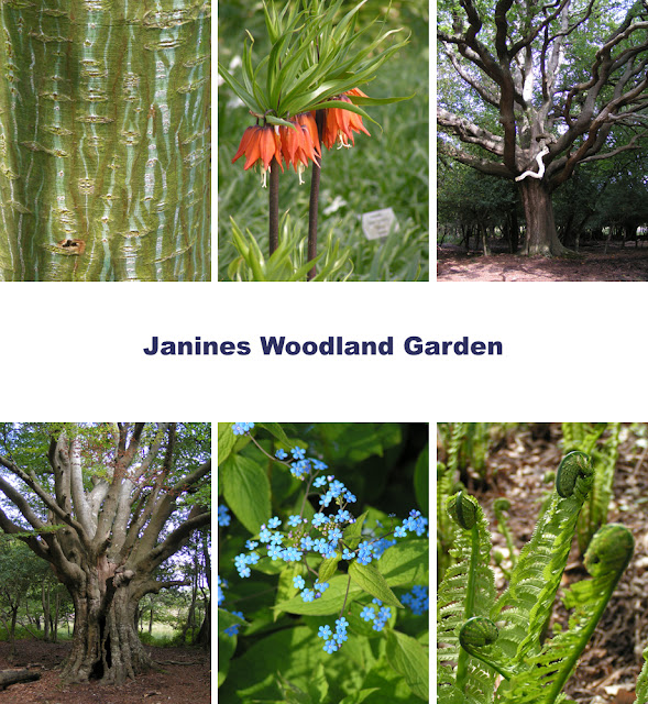 Janines Woodland Garden