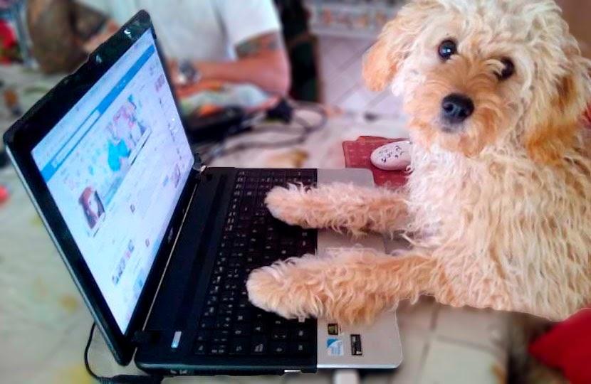 Mascota del blog