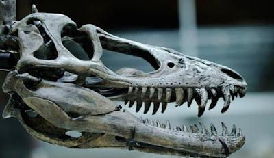 Kerangka Allosaurus Akan Dilelang 1 Juta Dollar