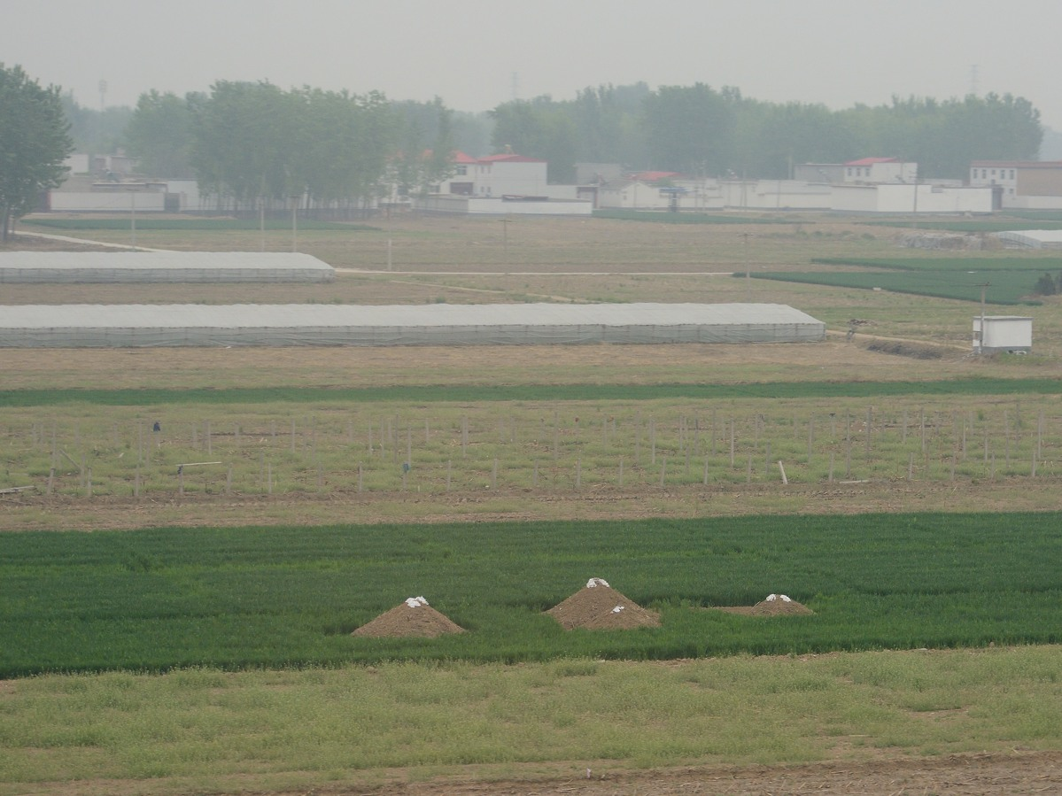 Grave mounds in Hebei Province in China