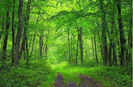 Manfaat Hutan Bagi Kehidupan di Bumi