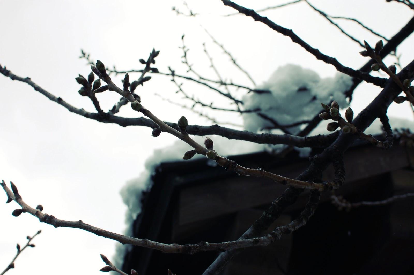 chamonix-nature-hiver-branches-neige-alpes-mont-blanc-haute-savoie