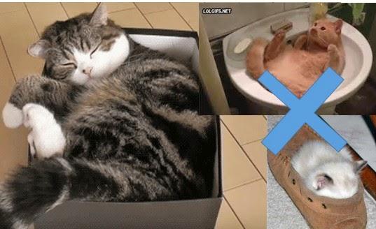 3 Alasan Kucing Suka Tidur Dalam Kardus