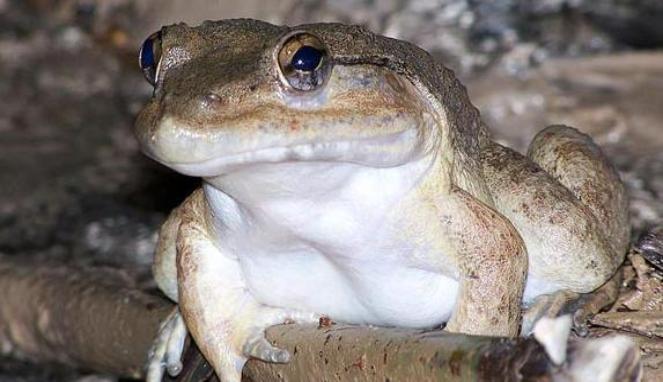 9 Spesies Menakutkan, Salah Satunya Dari RI