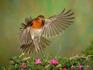 ¡Libre como las flores!