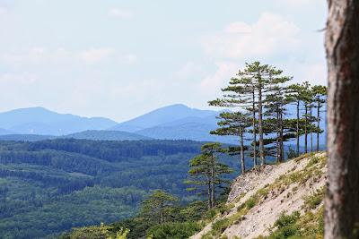 Bäume am Rande des Abgrunds (Steinbruch)