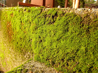 Moss Fremont Stair Project