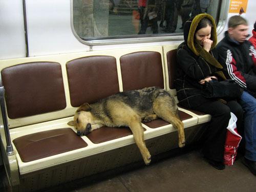 Stray Dog Train
