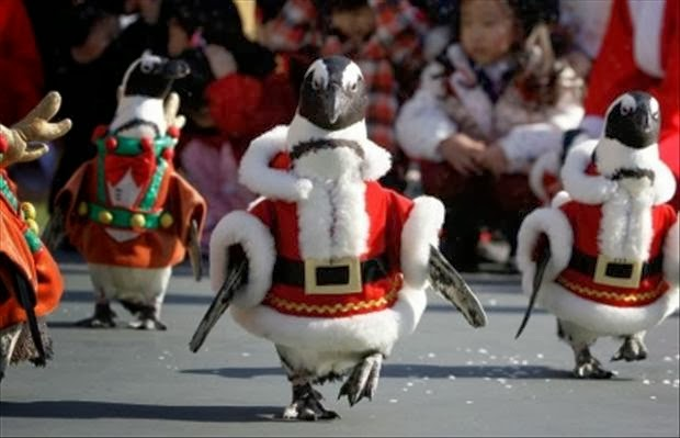 Penguin Santa Parade