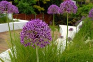 plante decorative pentru amenajarea gradinii