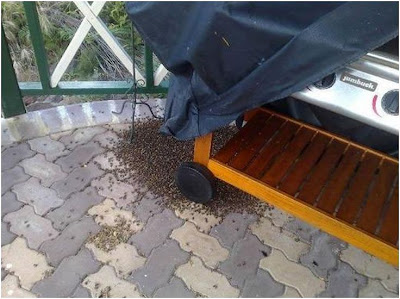 honey bees and had built a hive in my barbecue