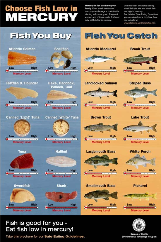 The fisheries blog mercury in fish what should i eat for Pregnancy fish chart
