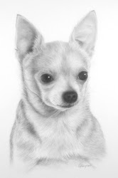 Chihuahua Head Study
