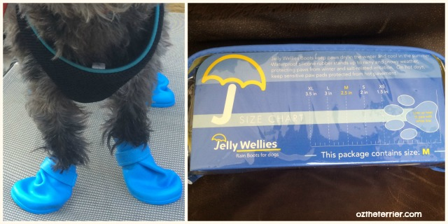 Oz the Terrier Jelly Wellies Rain Boots for Dogs size medium