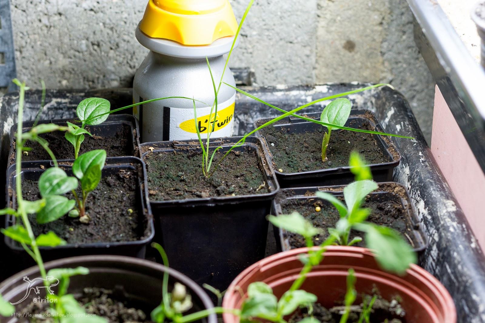 Le jardin de triton mes premiers semis - Arrosage gazon apres semis ...