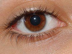 Mata Minus, Cara Mengobati Mata Minus, Menurunkan Minus Mata