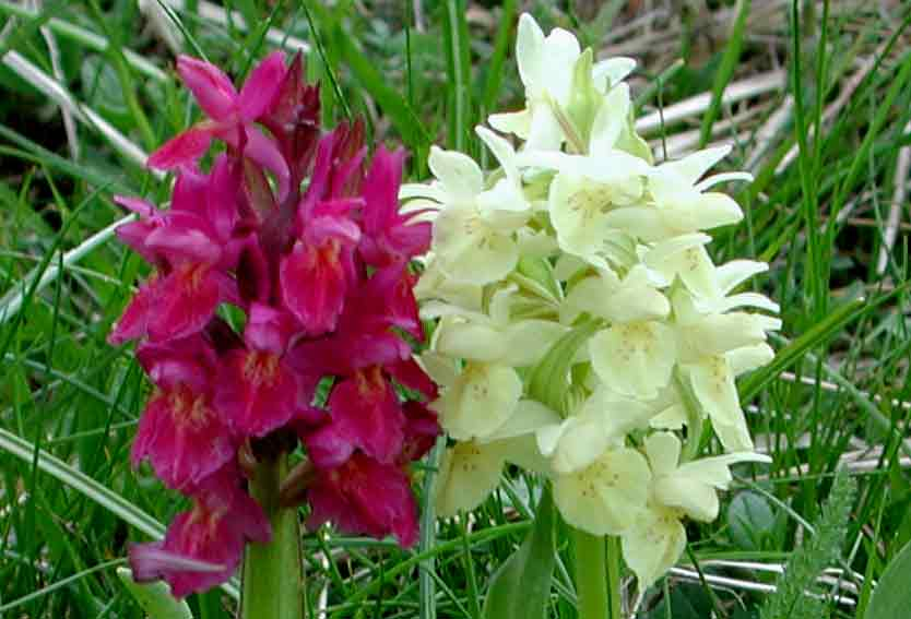 Piante Balcone Est : Piante e fiori le orchidee