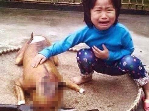 Jumpa semula anjing selepas dimasak