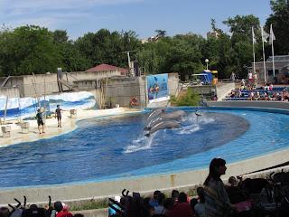 Exhibición de los delfines en el delfinario del Zoo Aquarium de Madrid