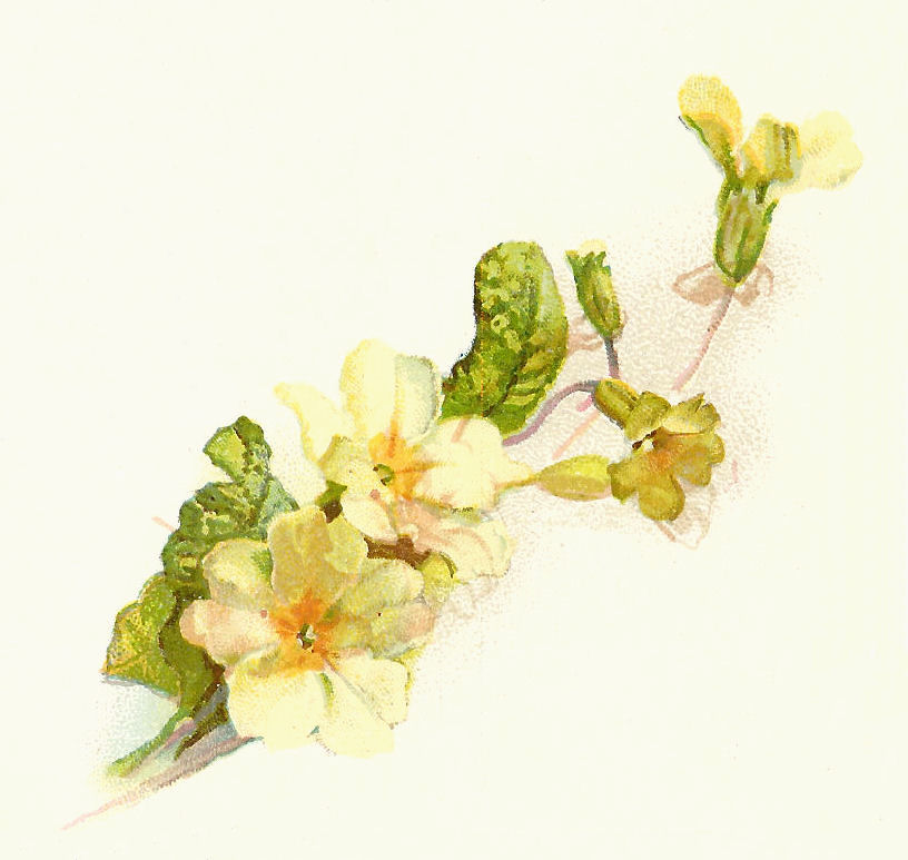 Clip Art Designs Vector Clip Art Graghic Free Flower