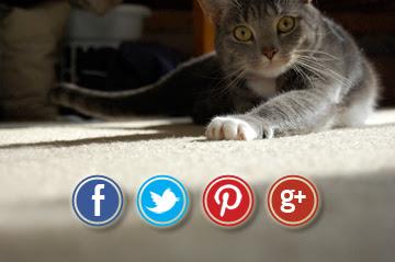 Social Media Kitty