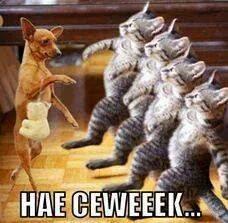 Lucu Kucing Numpang Lewat