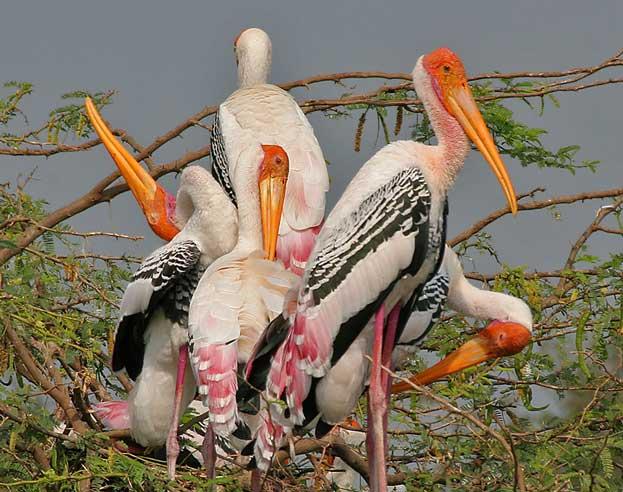 Ghana Bird Sanctuary