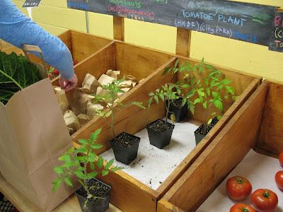 tomato plants:  Hollygrove Market & Farm, NOLA