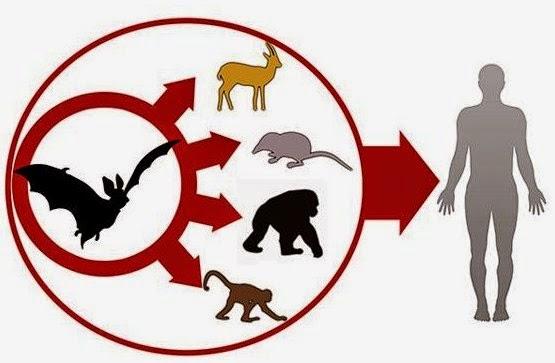 Penyebaran virus ebola