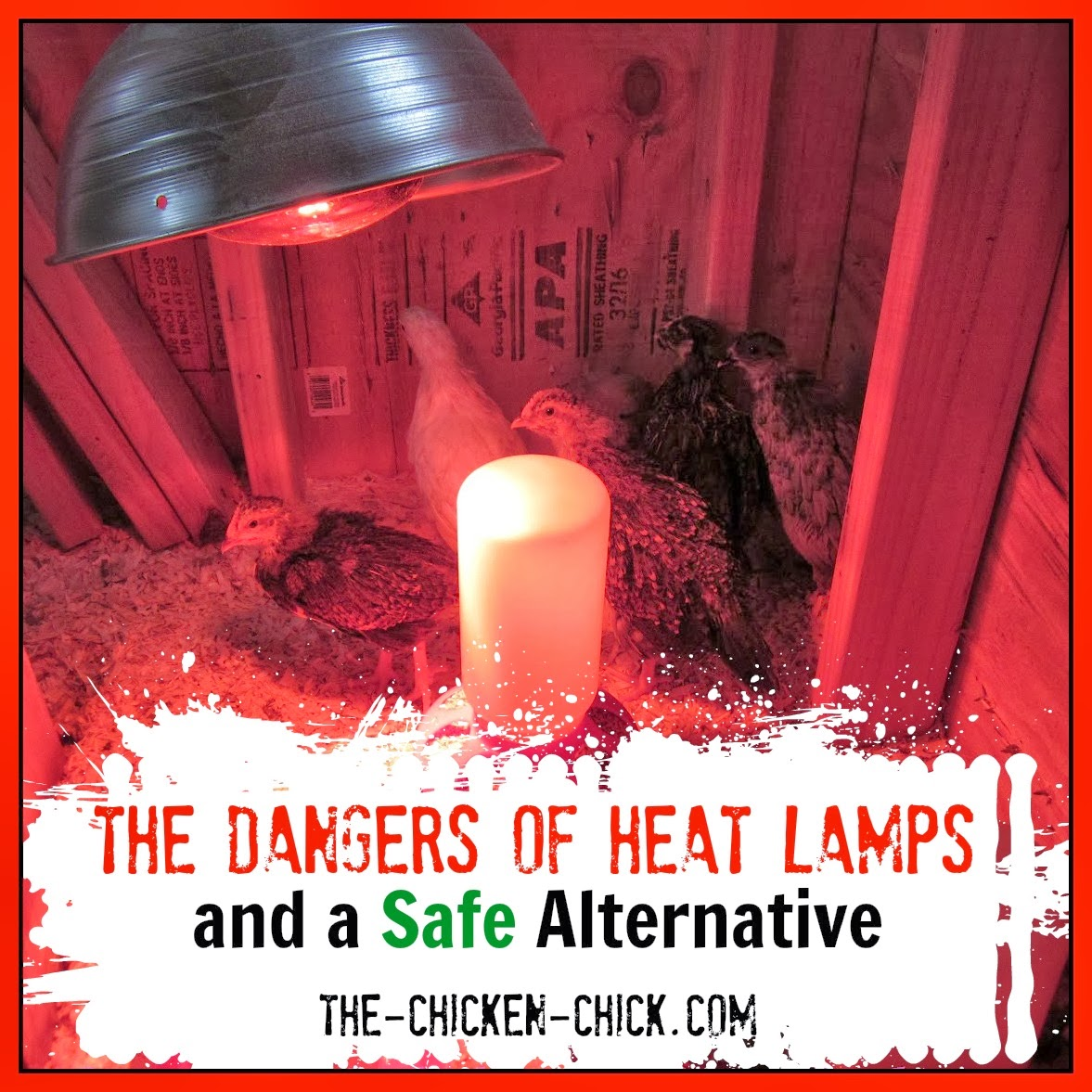 Traditional heat lamps are a fire hazard in chick brooders even when used conscientiously. The Brinsea EcoGlow Brooder is a safe alternative to dangerous heat lamps.