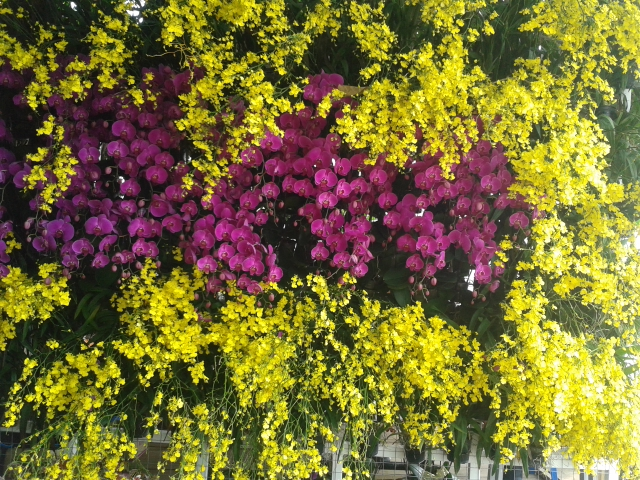 purple-yellow-orchids-wall