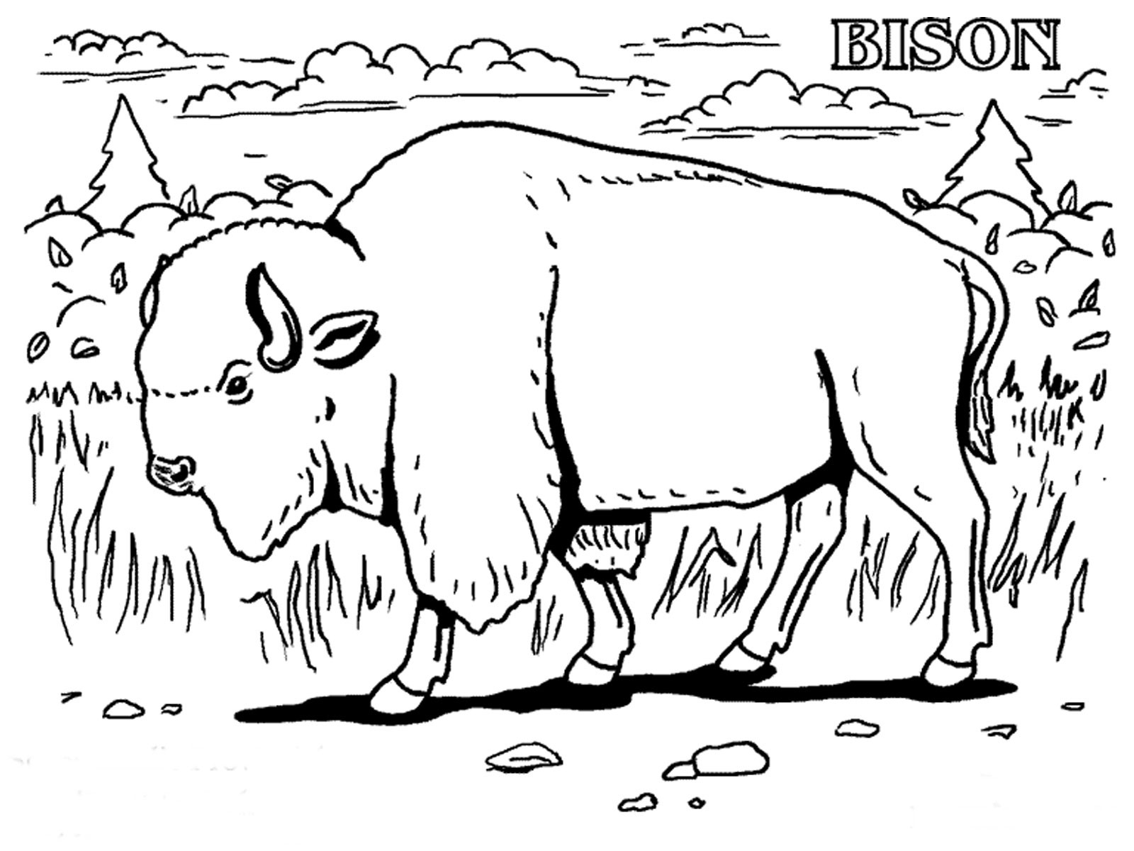 Free Coloring Pages Of Animals Realistic